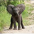 Un éléphant, ça trompe ...