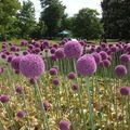 fleurs boules