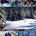 Snowshoe trail Stevens Pass