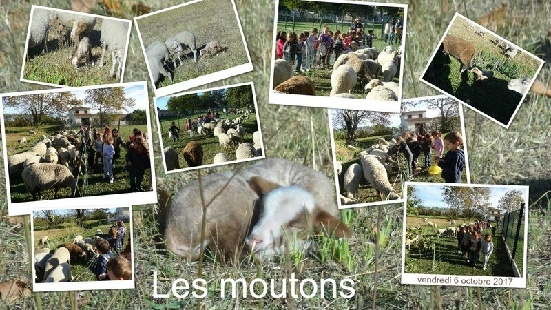 moutons 3