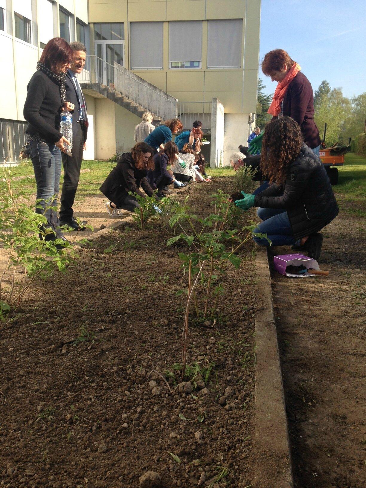 Les plantations de printemps au LEM : un petit jardin réussi, à faire durer jusqu'à la récolte