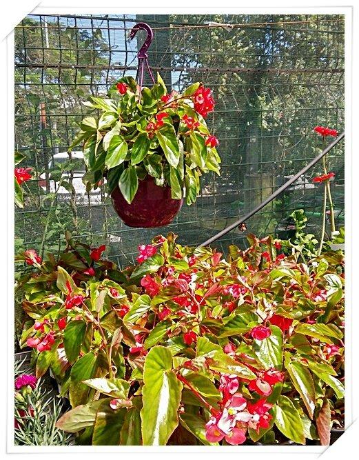 Fleurs De La Réunion 15 Chanteurs Des îles Poésie