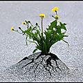 Flore - la nature reprend ses droits...