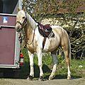 balade à cheval médiévale - Abbaye de Hambye (6)