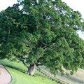 Aux arbres chevelus...