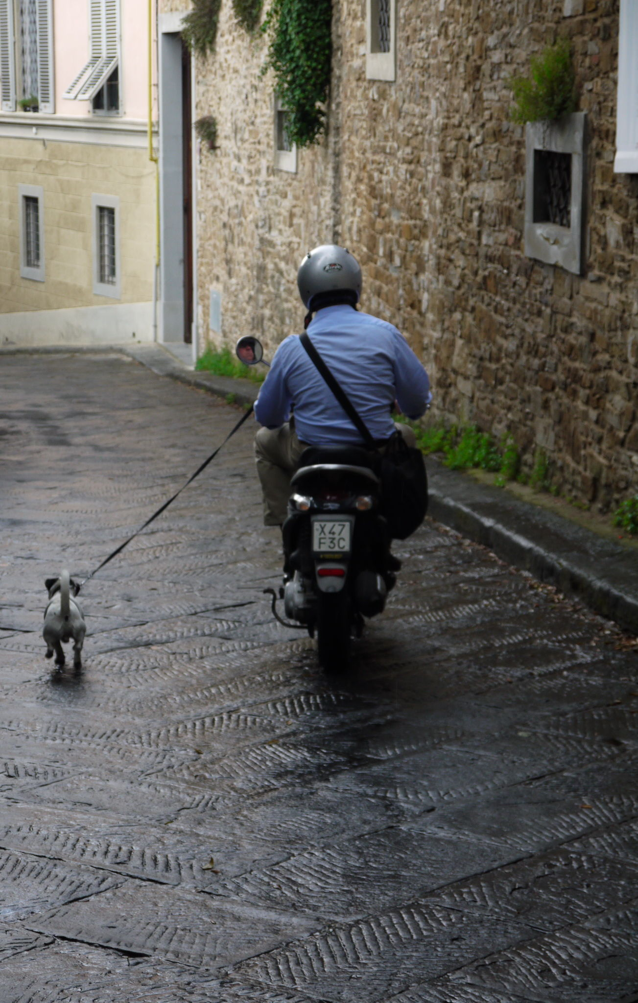 Florence_scooter_chien