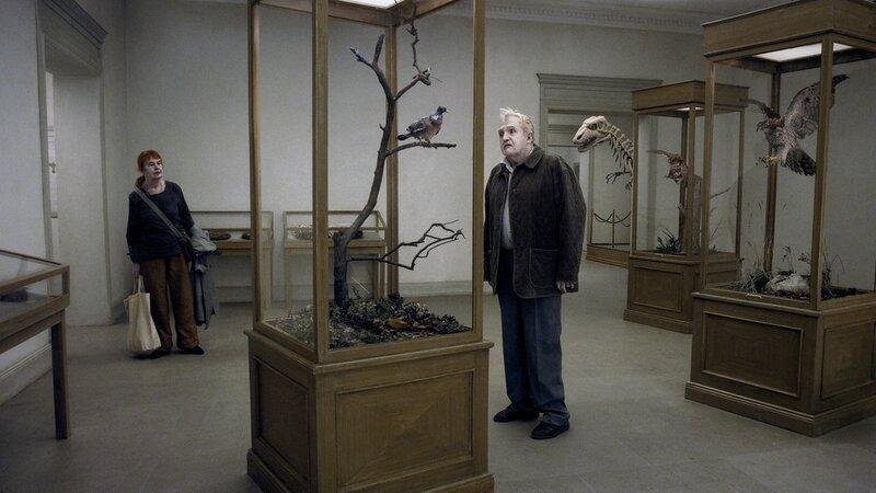un-pigeon-perche-sur-une-branche