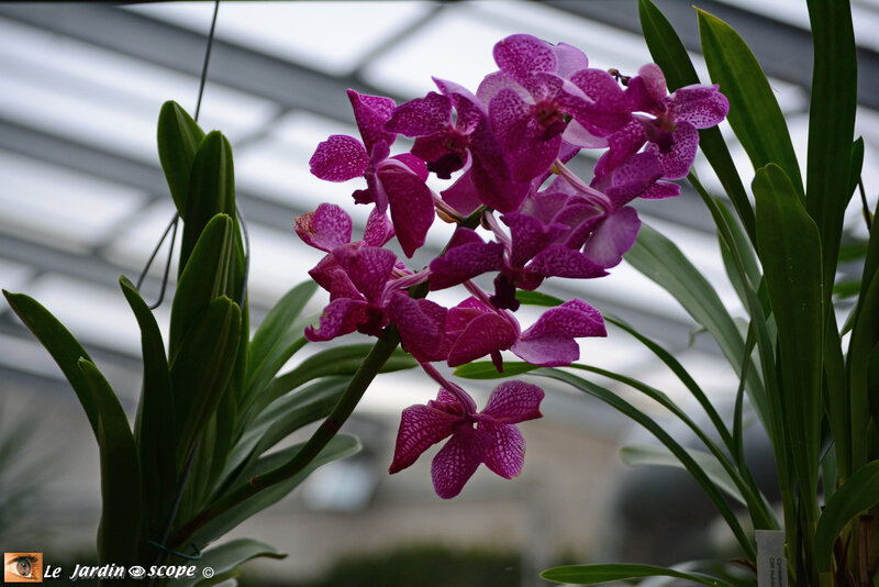 PAT_9234 Orchidées 2019 Orléans