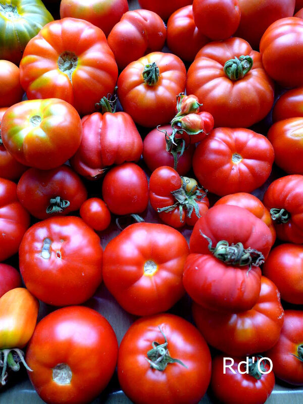 tomates-blog-15