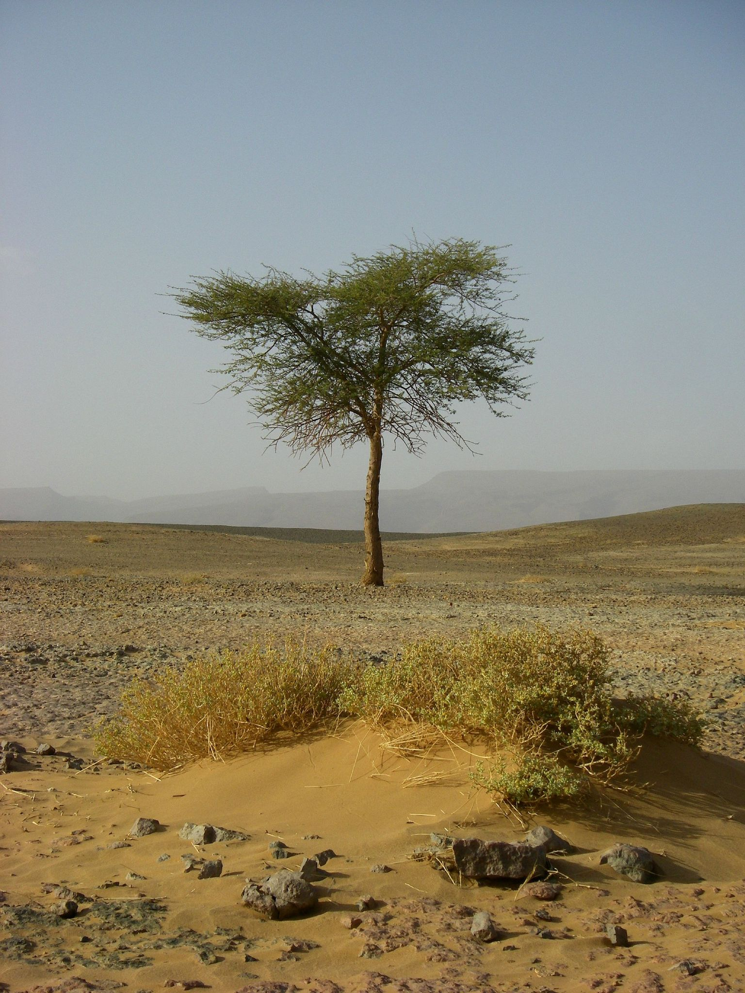 maroc 2008 (218)