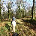 Balade à cheval dans la forêt P1080191