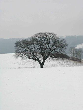 arbre46