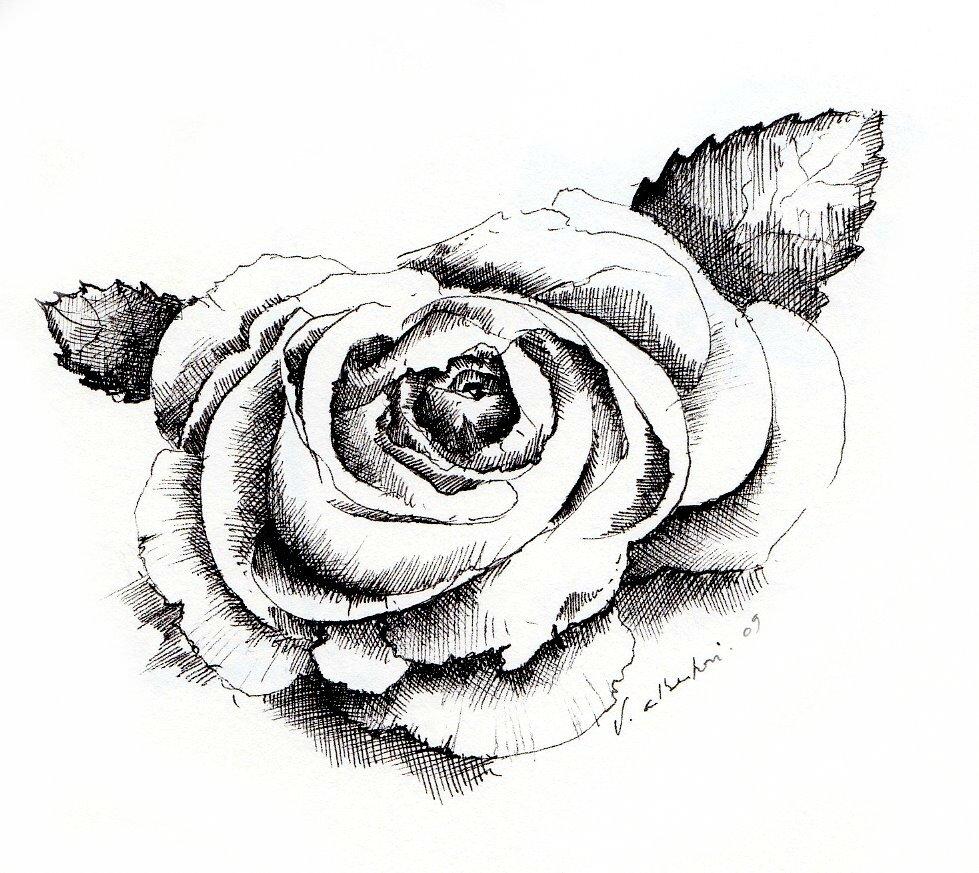 Une Une Fleurs De Novembre Les Valseurs