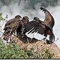 Leçon de vol à la croix du condor, pérou