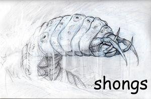 Shongs