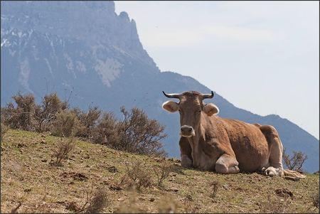 Aragon vache Pena 2 020411