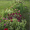 Windows-Live-Writer/jardin_6BD4/DSCF3574_thumb