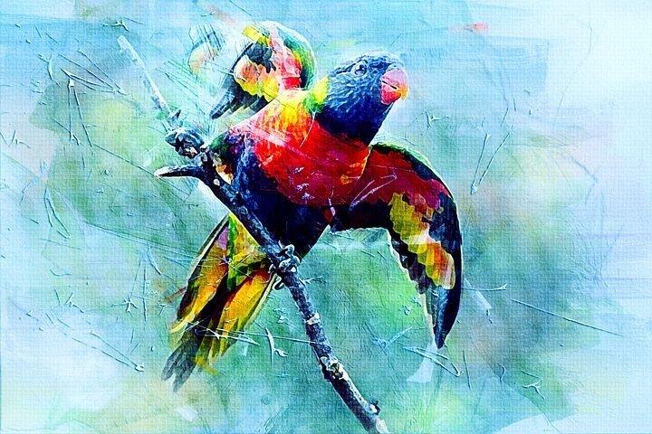 bird-2478913__480