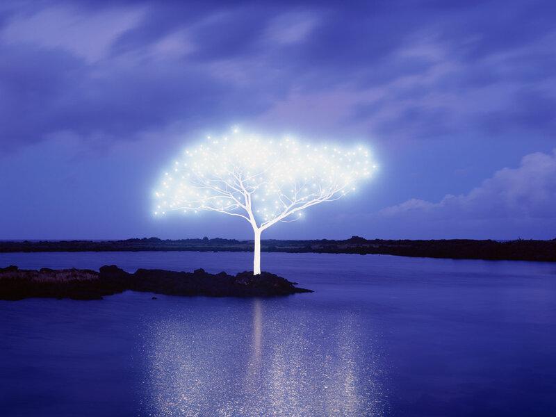 Lee-Jeong-Lok-arbre-lumiere-05