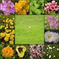 Petit agneau & fleurs