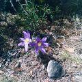 24 - Flore des causses 1