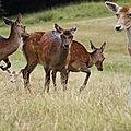 Découvrir les animaux des forêts européennes.