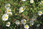 fleurs (4)