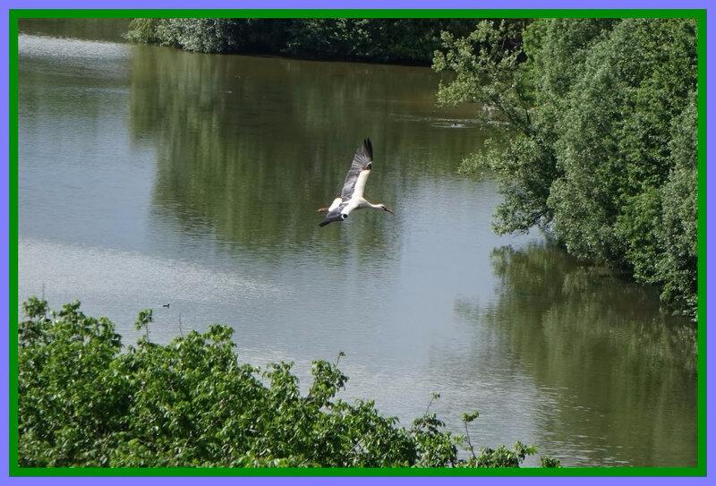 Parc Oiseaux5