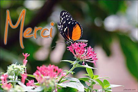 merci-papillon
