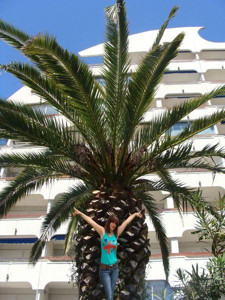 nat palmier