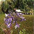 Windows-Live-Writer/jardin_D005/DSCF3877_thumb