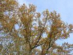 arbres_53