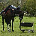 Le tandem à cheval !?!