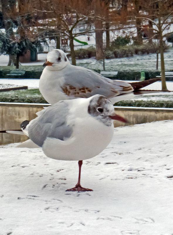 Paris neige (8)