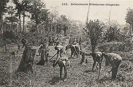 Ouganda défricheurs