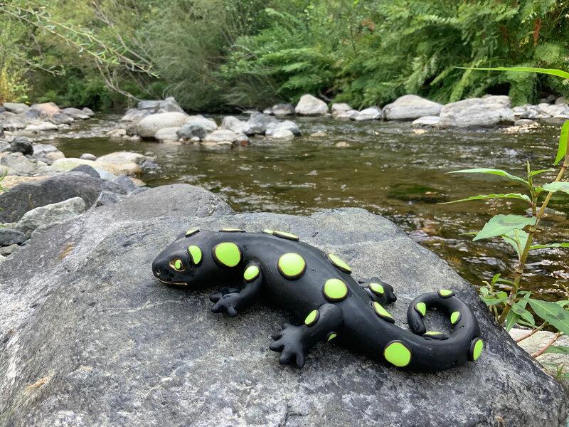 salamandrecorse-mienville-2