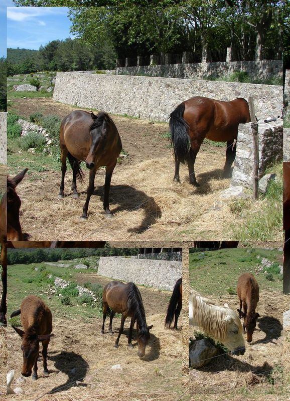 CHEVAUX__R_solution_de_l__cran_
