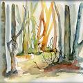 Toujours dans les arbres..........