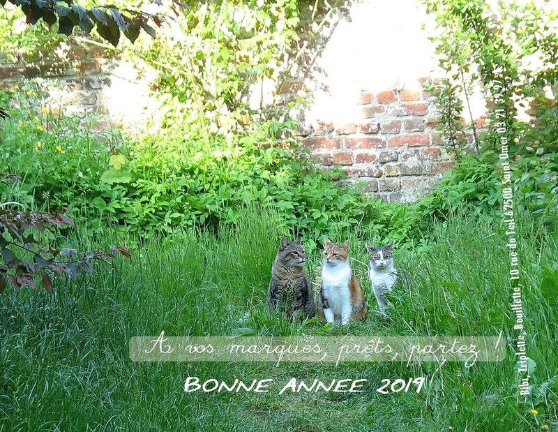 gheselle-catherine-chats-dressage-2019-bibi-triplette-bouillette