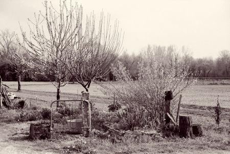 printemps_01