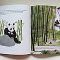 Un panda géant en france