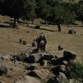 Faune et Flore du Simien : Babouins Geladas