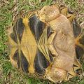 Ma tortue :o)