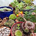 plante grasse1
