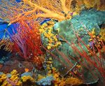 The_Great_Barrier_Reef_3