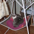 Chat dormeur...