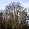 Petit panorama des beaux arbres de saint jacques sur darnétal (76160)