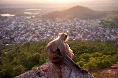 wildlife_monkeys