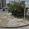 Rond-point à maceio (brésil)