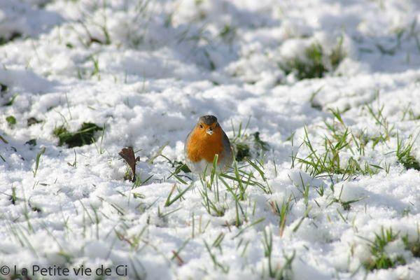 la_petite_vie_de_ci birds (1)